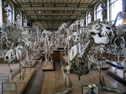Natural History (Paris)