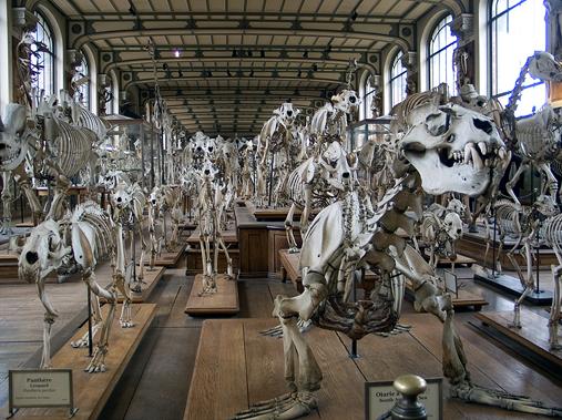 Natural History (Paris)